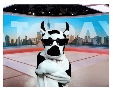 audition cow