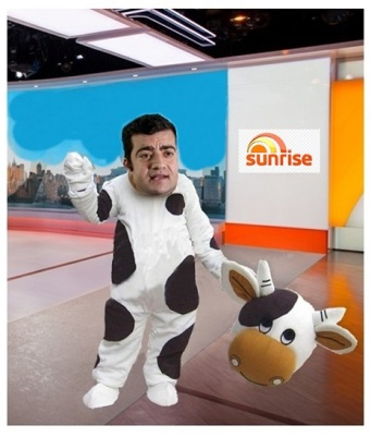 sam cash cow