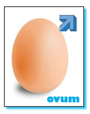 egg boy album cova - net.jpg