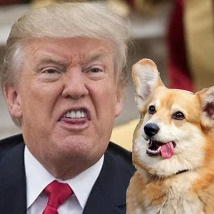 trump-with-corgi-net