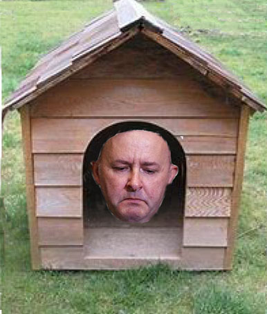 albanese in the doghouse - net