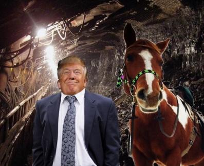 trump pony