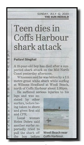 shark attack - net